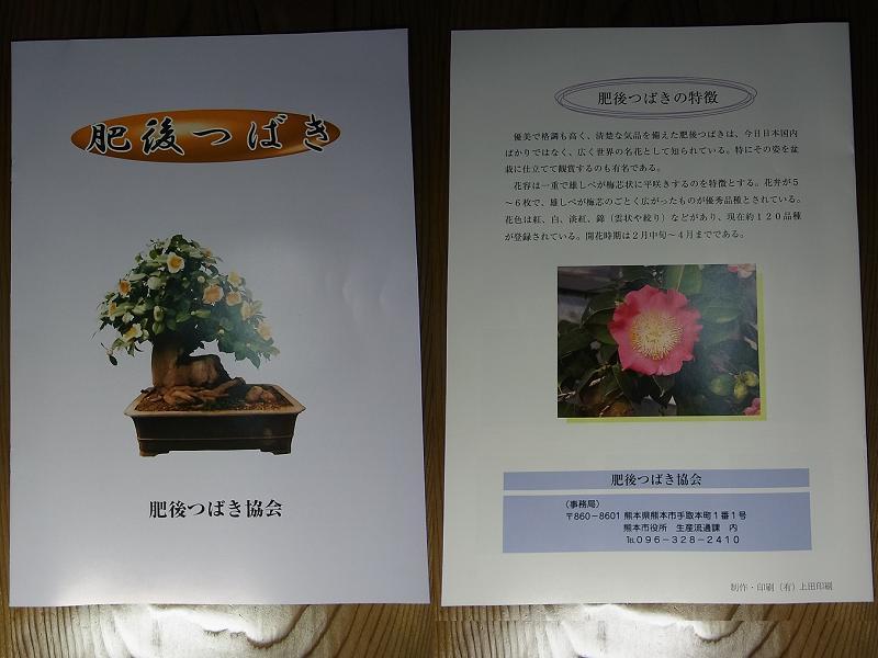 椿・ツバキ・つばき・サザンカ・山茶花YouTube動画>2本 ->画像>114枚