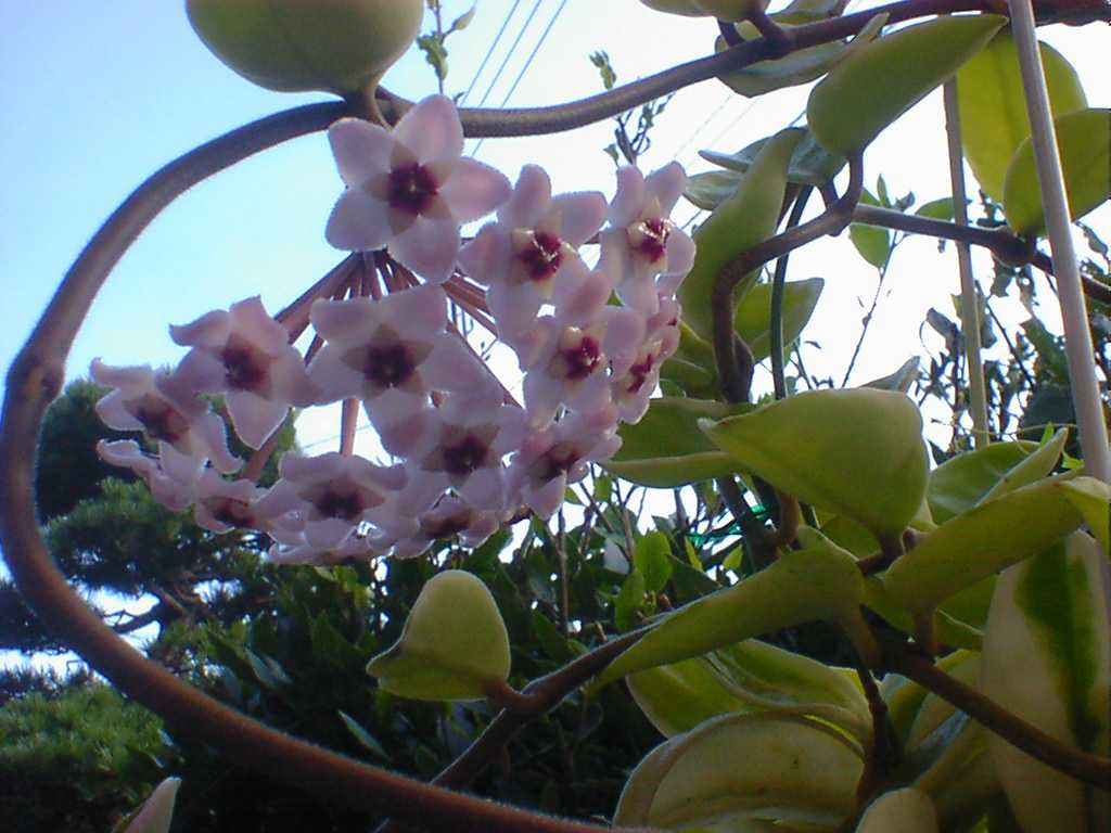 【芳香・薫】香りのよい植物 Part3【花・葉・木】YouTube動画>7本 ->画像>21枚